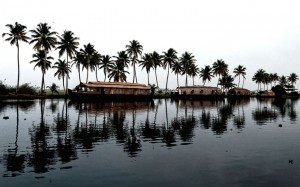Houseboat and Coconut trees lined up