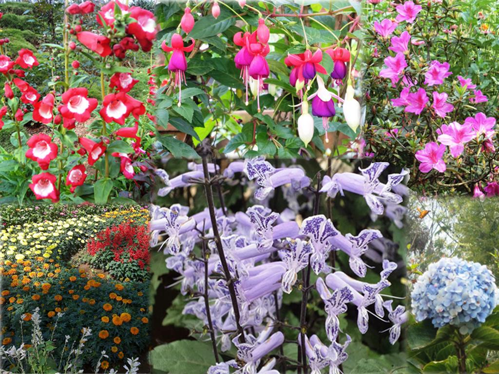 Kerala Tourism Attractions - Flowers at Blossom International Park Munnar
