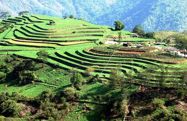 Kerala Tourism Attractions - Tata Tea Plantations & Tata Tea Museum - Munnar