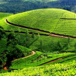 Get Tickled in the Lap of Heaven – Munnar