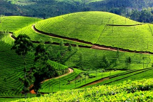 Munnar Hill - Kerala, India