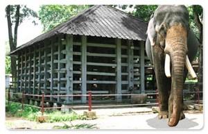 Elephant Cage - Konni, Pathanamthitta
