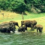 Cochin-Munnar-Thekkady-Alleppey Package 5N/6D