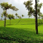 Cochin-Munnar-Thekkady-Alleppey-Kovalam Package 7N/8D